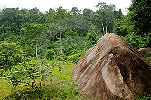 Rainforest Stock Image - Image: 16351701