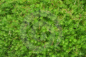 Green Leaves Stock Photos - Image: 16354343