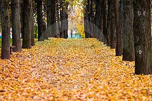 Autumn Avenue Royalty Free Stock Photo - Image: 16370315