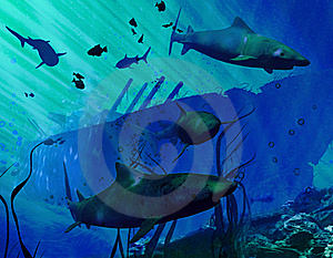 Sharks And Navy Destroyer Royalty Free Stock Photo - Image: 16370355