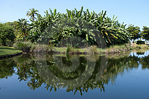 Reflection On A Pond Stock Images - Image: 16371214