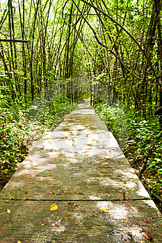 Path In Jungle Stock Photos - Image: 16371223
