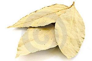 Bay Leaf Stock Image - Image: 16377581