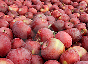Many Freshly Picked Red Apples Stock Image - Image: 16389731