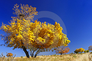 Maple Royalty Free Stock Photos - Image: 16397108