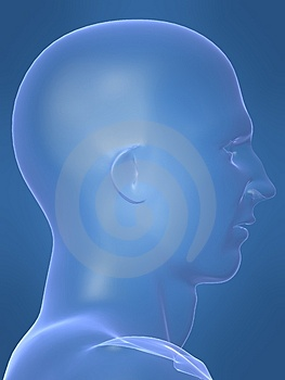 Human Male Shape Royalty Free Stock Images - Image: 1642079