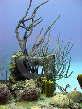 Colorful Coral Reef Scene Stock Photo - Image: 16404630