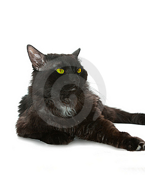 Black Cat Royalty Free Stock Images - Image: 16408429