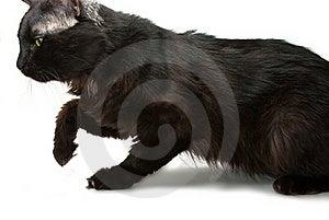 猫四处寻觅 免版税库存图片 - 图片: 16408459