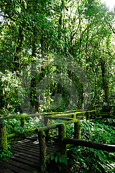 Walkway In The Forest Royalty Free Stock Photo - Image: 16412445