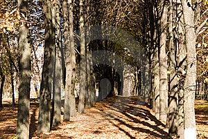 Autumn Avenue Stock Photography - Image: 16418292