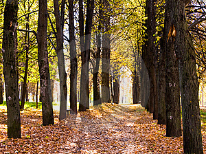 Autumn Avenue Stock Images - Image: 16418304