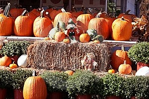 Fall Pumpkins, Hay And Scarecrows Stock Image - Image: 16429921