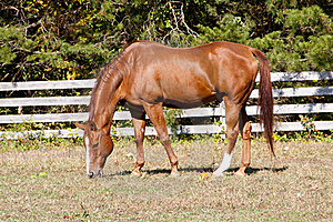Strong Stallion Grazing Stock Photo - Image: 16431710