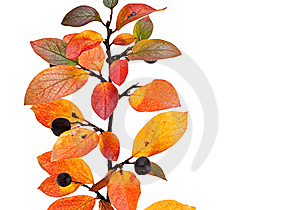 Autumnal Leaves. Stock Photos - Image: 16433583