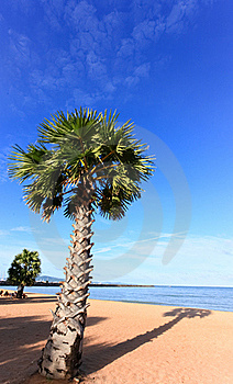 Beach , Coconut And Blue Sky Stock Image - Image: 16434881