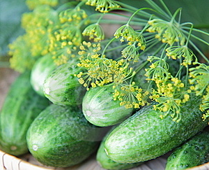Cucumbers And Dill Royalty Free Stock Photography - Image: 16439947