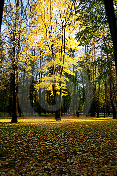 Autumn-4 Royalty Free Stock Images - Image: 16443409