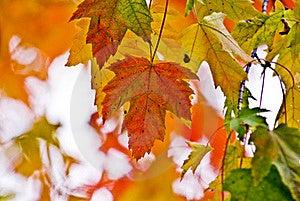Autumn Foliage Stock Photo - Image: 16447710