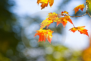 Autumn Foliage Royalty Free Stock Image - Image: 16447886