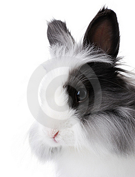 Rabbit Portrait Royalty Free Stock Images - Image: 16460179