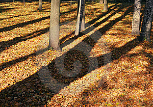 Tree Shadow Stock Photo - Image: 16460620