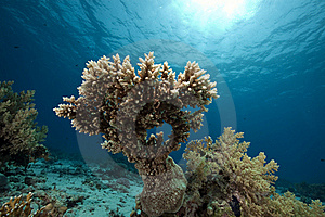Coral And Ocean Royalty Free Stock Images - Image: 16461259