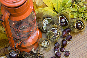 Kerosen Lamp Still Life With Spanish Chestnuts Royalty Free Stock Image - Image: 16469496