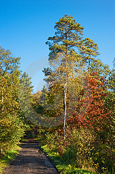 Autumn Forest Path Stock Photos - Image: 16471123