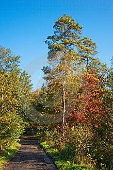 Autumn Forest Path Stock Photos - Image: 16471123