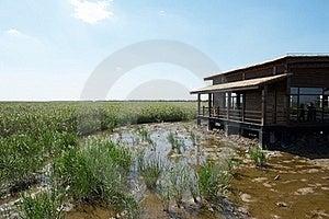 Wetland Royalty Free Stock Image - Image: 16479096