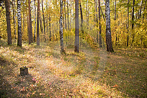 Autumn Wood Stock Photo - Image: 16480460
