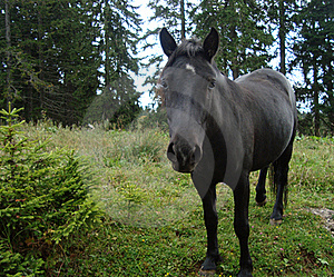 Black Horse Stock Photo - Image: 16481560