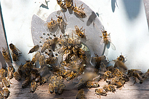 Turn In A Beehive Royalty Free Stock Images - Image: 16481599
