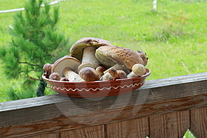Mushrooms Royalty Free Stock Images - Image: 16482129