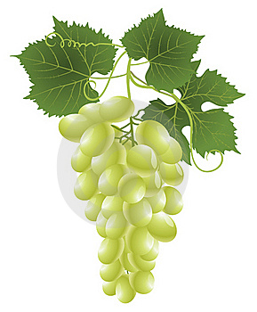 White Grape Stock Image - Image: 16482551