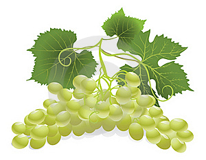White Grape Royalty Free Stock Images - Image: 16482639