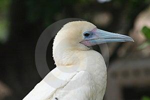 Pájaro Blanco Fotos de archivo - Imagen: 1651633