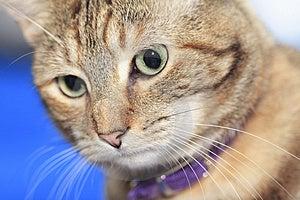 Sad Cat Stock Images - Image: 1656124
