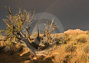 Rainbow Sopra La Sosta Nazionale Degli Archi Immagini Stock - Immagine: 16505674