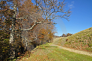 Soil Road On A Hillside. Royalty Free Stock Images - Image: 16509169