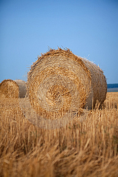Stack Of Hay Stock Photo - Image: 16510490