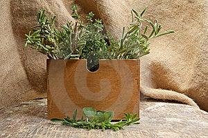 Healing Herbs Stock Photo - Image: 16515090