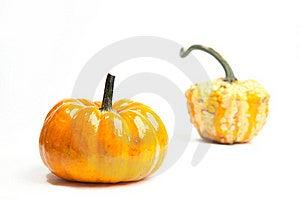 Pumpkins Stock Images - Image: 16515204