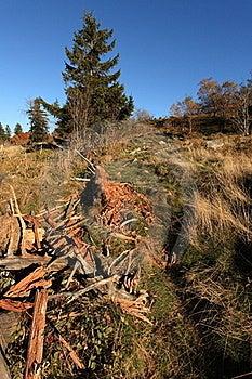 Deforestation Royalty Free Stock Image - Image: 16515296