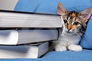 Cute Kitten With A Books Royalty Free Stock Photos - Image: 16516218