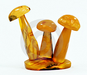 Mushrooms Of Baltic Amber Stock Images - Image: 16517604