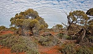 The Australian Landscape Stock Photos - Image: 16518103