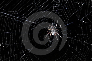 Spider In Web Royalty Free Stock Photos - Image: 16519088