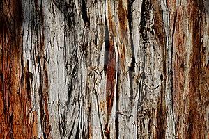 Wood Background Royalty Free Stock Photo - Image: 16522305